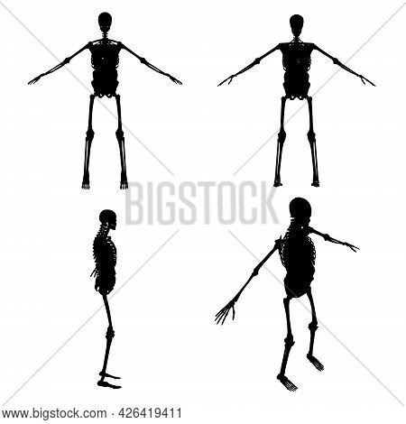 Set With Silhouettes Of A Human Skeleton With Internal Organs In Various Positions Isolated On A Whi