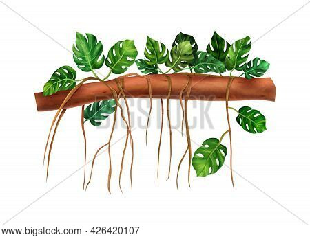 Exotic Monstera Vine Twining Round Tree Branch Realistic Vector Illustration