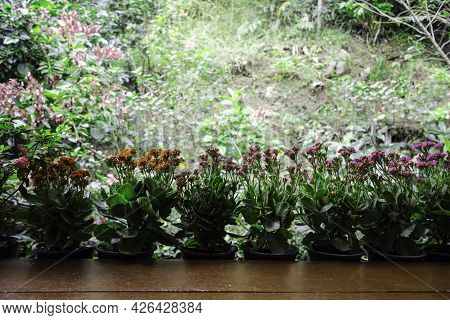 Beautiful Flower Pots On Balcony With Green Grass Background