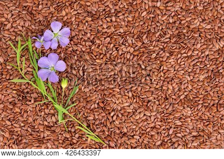 Flax Flowers On A Background Of Flax Seeds. Flax Seeds, The Concept Of Useful Products. Flat Lei. Co