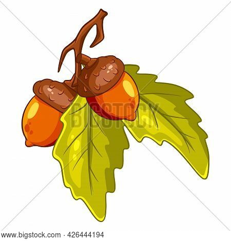The Fruit Of The Oak Is Edible. Two Acorns On A Branch With Leaves.