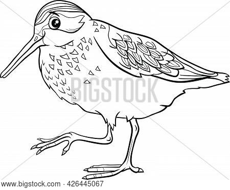 Black And White Cartoon Illustration Of Funny Western Sandpiper Bird Comic Animal Character Coloring