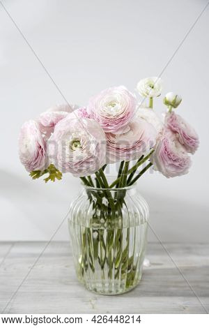 The Bouquet Of Pale Pink Persian Buttercups In The Glass Vase On The Table Against The Background .