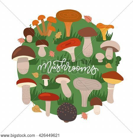 Mushrooms Edible Vegeterian Mushrooming Poster Circle Composition. Cartoon Champignon, Boletus, Fore