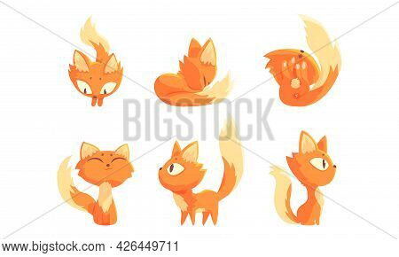 Cute Ginger Kitten Cuddling And Rolling On Its Back Vector Set