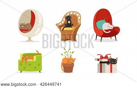 Cat Domestic Pet Sitting On Armchair And In Flowerpot Vector Set