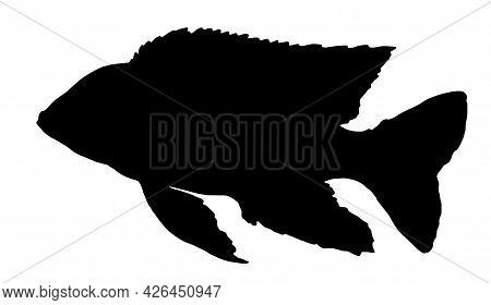 Vector Silhouette Of Aulonocara Firefish Fish. A Black Silhouette Drawn By Hand In The Style Of A Sk