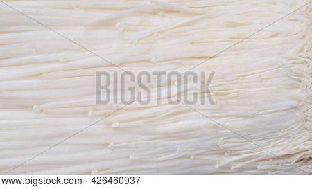 Golden Needle Mushroom. Top View Enoki Mushroom, Golden Needle Mushroom White Background.