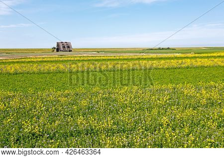 Aerial from rapeseed fields in Friesland the Netherlands