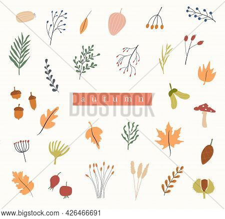 Set Of Autumn Herbarium. Different Branches And Twigs With Berries And Leaves. Card With Wild Forest