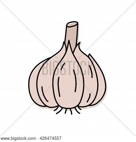 Garlic. Vegetable Sketch. Color Simple Icon. Hand Drawn Vector Doodle Illustration