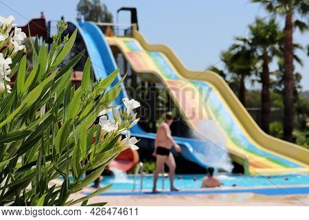 View Through Oleander Flowers To Water Slides At Aqua Park And Swimming Pool With People. Family Lei