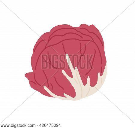 Red-leaf Salad. Icon Of Italian Radicchio Chicory. Fresh Scotch Kale Or Cabbage Head. Organic Vegeta