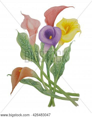 Bouquet Of Calla Flower Blossom Illustration Watercolor Painting, Pink, Yellow And Violet Petals Wit