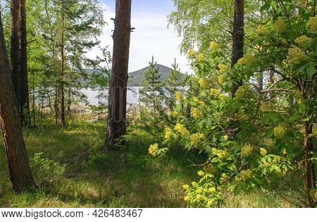Calm Beautiful Wood Land With Lake And Mountain On The Background In The Summertime. Coniferous And