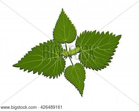 Green Stinging Nettle Bush Top View On White Background Logo