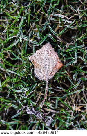 Frosted Leaf And Close-up Of Winter Morning Frost On Green Grass Shallow Depth Of Field