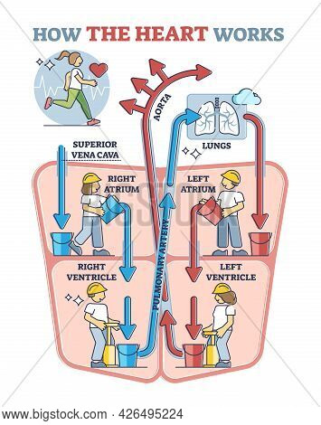 How Heart Works Explanation With Inner Human Organ Function Explanation In Outline Diagram. Anatomic