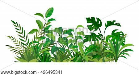 Herbal Green Decor. Beauty Nature Ferns And Herbs. Tropical Greenery With Leaves And Stems. Summer F