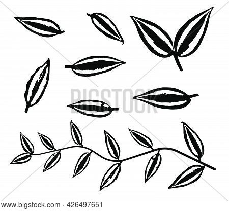 Black Thin Tradescantia Liana Grass Leaves Silhouettes Isolated On White. Climbing Thin Plant Brush.