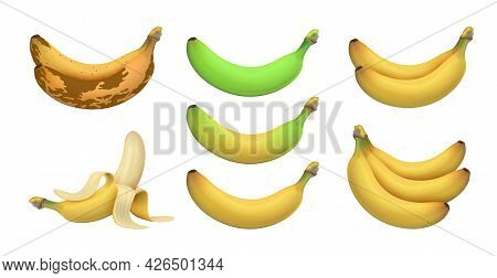 Isolated Realistic Banana. Tropical Bananas, Exotic Fruits. Ripeness Levels From Green Underripe To