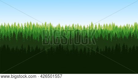 Pine Forest. Silhouettes Of Coniferous Green Trees. Wild Landscape Horizontally. Nice Panoramic View