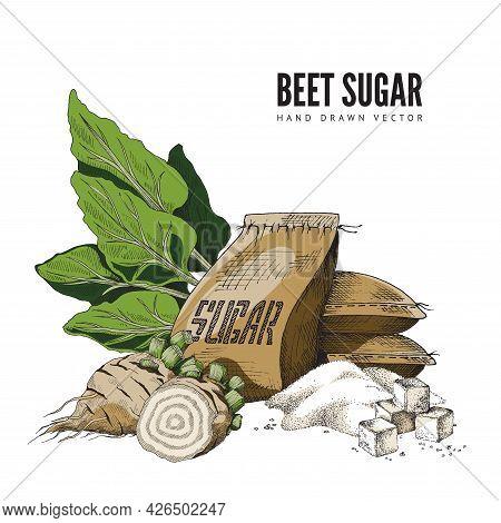 Color Hand-drawn Vector Illustration Of Sugar Beet With Bag Of Sugar And Lump Sugar.