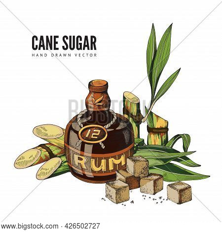 Vector Color Hand Drawn Design Of Poster With Cane Sugar Advertise.