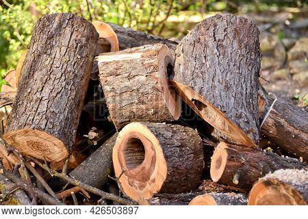 Sawing Tree Trunks During Seasonal Work In The Garden. Harvesting And Collecting Firewood And Wood F