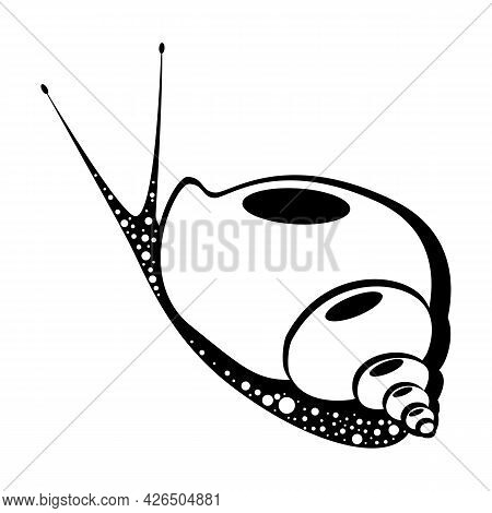 Snail. Isolated On White. Underwater World. Vector