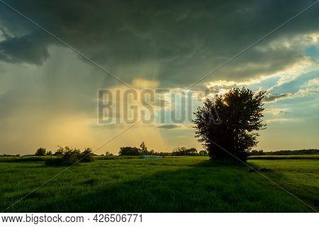 Natural Phenomenon, Sun-lit Rain And Green Meadow