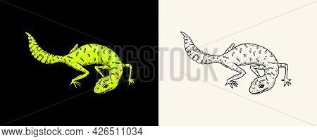 Ibiza Wall Lizard, Common Leopard Or Spotted Fat-tailed Gecko, Exotic Reptiles. Wild Animals In Natu