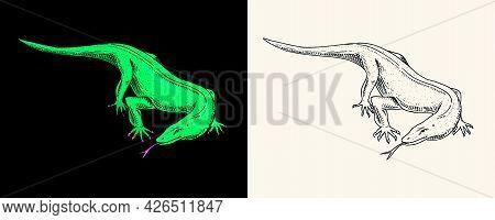 Komodo Dragon Monitor, Exotic Reptiles. Wild Animals In Nature. Engraved Hand Drawn.