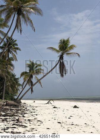 Indian Ocean Coast. Coastal Palms. Zanzibar Island. Africa. Typical View.