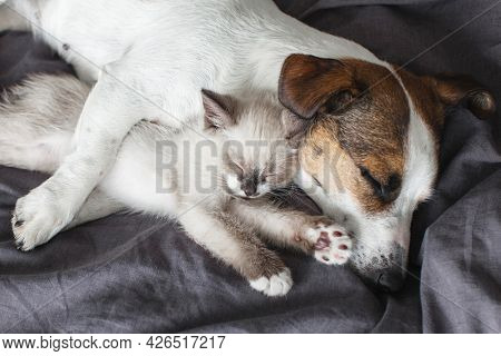 Dog and cat sleeping together. Dog and little kitten. Pets sleep