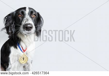 Dog Wearing A Winning Prize Golden Medal. Dog Posing With A Medal Or Award. Isolated On Gray Backgor