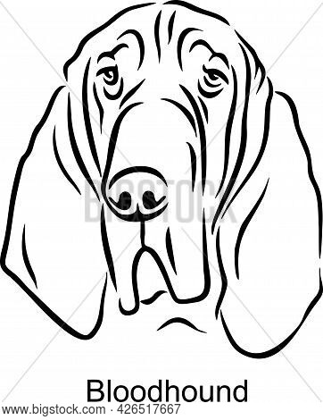 Bloodhound Portrait Dog In Line Style - Pet Portrait In Light Style Head Isolated On White