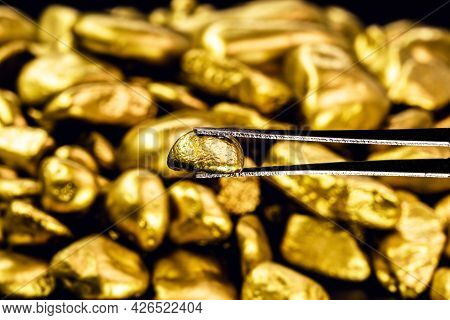 Tweezers Holding Shiny Gold Nugget, Concept Of Jewelry And Ore And Goldsmith Work