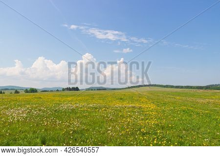 Sunny Summer Landscape With A Field And Blooming Dandelions. Wild Meadow On Summer Day