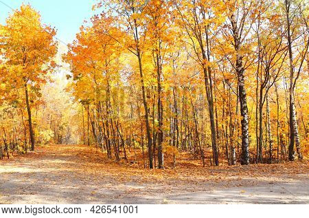 Calm fall season. Beautiful landscape with road in autumn forest. Maples trees with yellow and orange leaves and footpath in the woodland in sunny day
