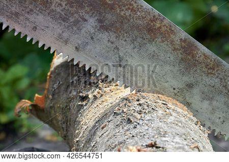 Close-up Old Rusty Saw Cutting A Log Tree.