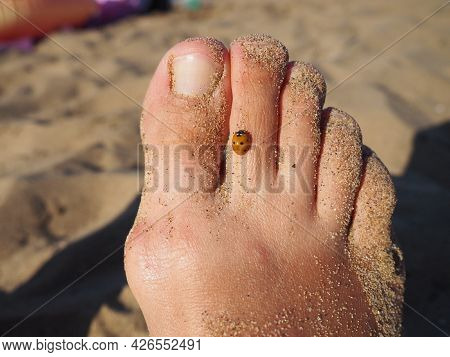 A ladybug beetle crawls on its toes. Women\'s foot on the background of beach sand. Healthy nails wi