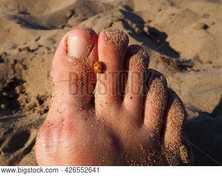 A Ladybug Beetle Crawls On Its Toes. Women\\\'s Foot On The Background Of Beach Sand. Healthy Nails