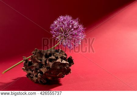 Minimalist Floral Still Life With Purple Allium On A Wood Bark Against A Bright Red Background. Gian