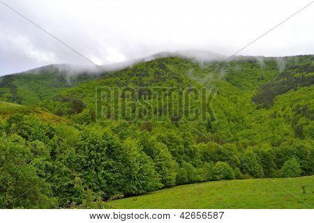 Spring at Basque Pyrenean.