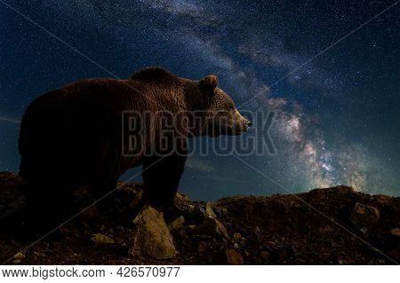 Beautiful Night Landscape With Bear In Mountain And The Milky Way Galaxy