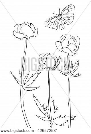 Vector Drawing Natural Background With Flowers Of Buttercup And Butterfly, Hand Drawn Illustration,