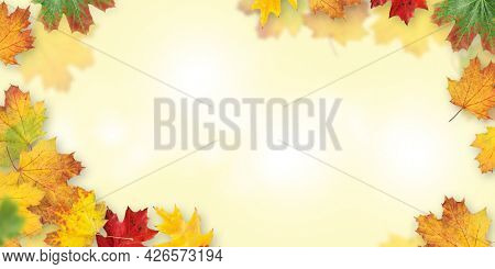 Autumn leaves background. Colorful fall maple leaves backdrop texture with copy space