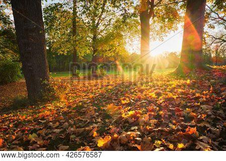 Golden autumn fall October in famous Munich relax place - Englischer Garten. English garden with fallen leaves and golden sunlight. Munchen, Bavaria, Germany