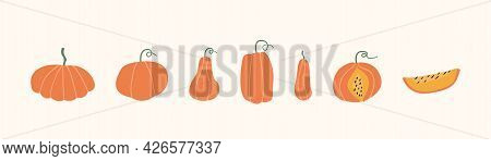 Set Of Autumn Pumpkins, Butternut Squash And Gourd Of Different Shape And Sizes, Cutted Slice And Wh